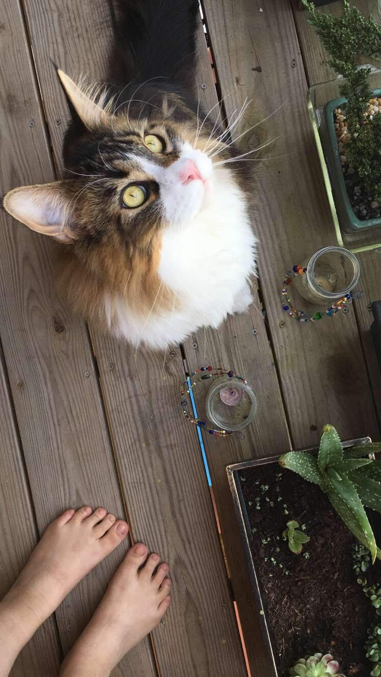 Nugget as a youngster, enjoying the fairy garden on our balcony in Augusta.