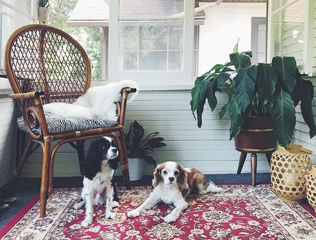 Just a couple of Kings on a porch. 🐶 🐶 #nationalmuttday . . . . #littlehouselove #becausecommunity #loveyoumore #smallhouseliving #minimalistfamily #minimalistlifestyle #minimalistliving  #bohoporch #bohodecor #flipthescript #livingsmall #tinylifestyle #changeyourlifestyle #writeyourstory #lovemyfamily #rattanfurniture #craigslistfind #thegiftthatkeepsongiving  #livehappylife #apartmenttherapy #selfcare #slowliving #facebookmarketplace #liveyouradventure #weareheretobefree #lovethyself #spreadgoodvibes #selflovematters #bucketlistfamily