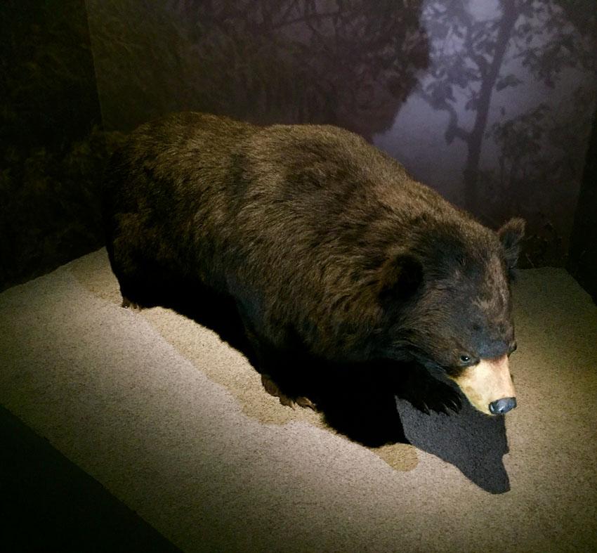 expo especes d'ours 7 la-tete-en-lair.net.jpg