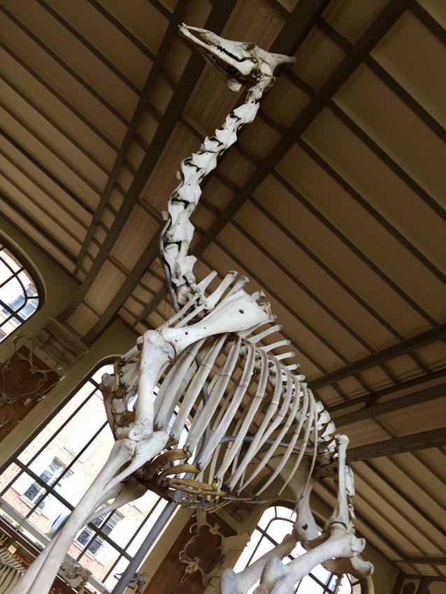 galerie de paléontologie 6 la-tete-en-lair.net.jpg