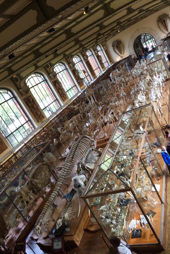 galerie de paléontologie 1 la-tete-en-lair.net.jpg