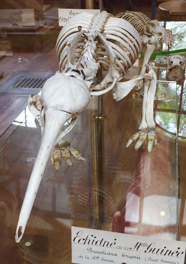 galerie de paléontologie 5 la-tete-en-lair.net.jpg
