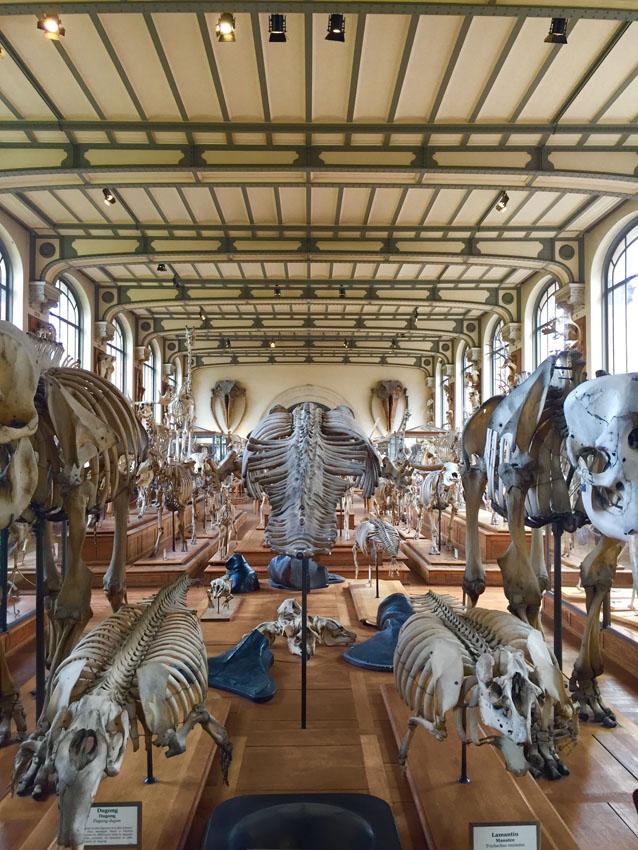 galerie de paléontologie 14 la-tete-en-lair.net.jpg