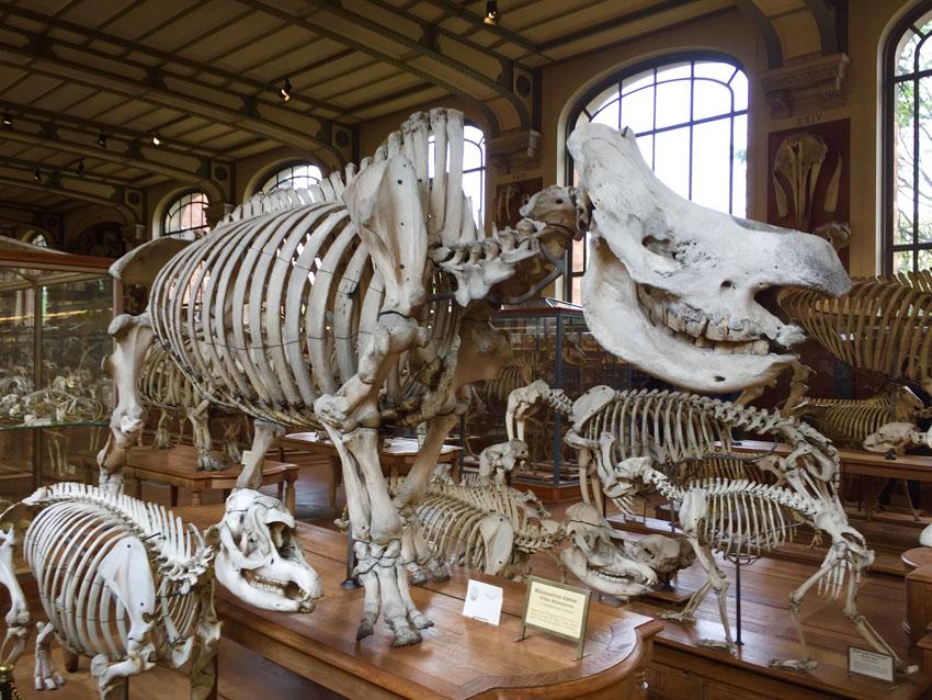 galerie de paléontologie 8 la-tete-en-lair.net.jpg