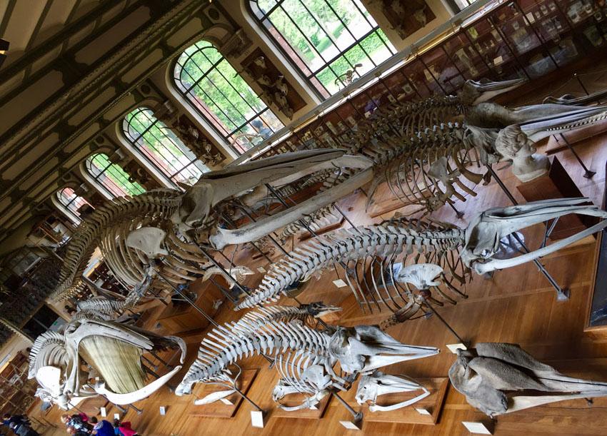 galerie de paléontologie 23 la-tete-en-lair.net.jpg