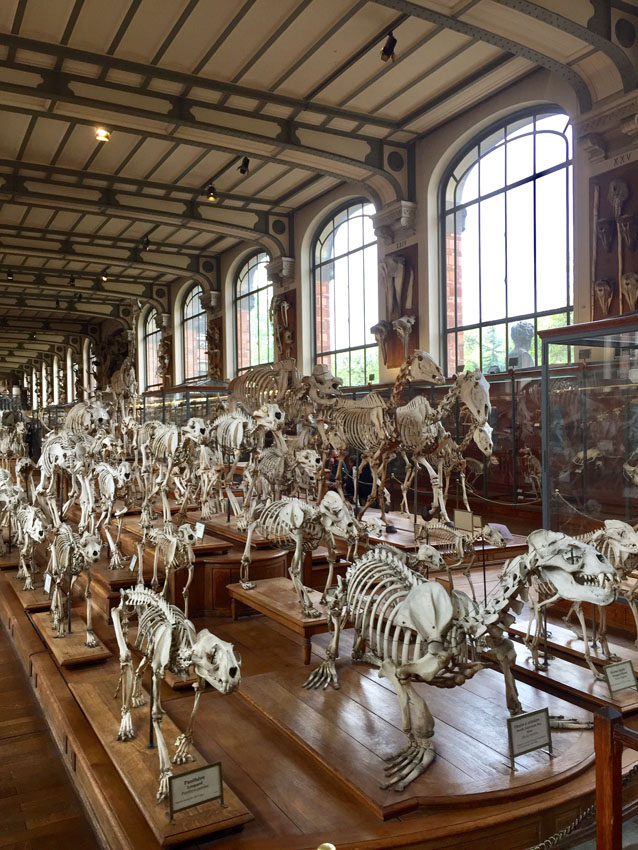 galerie de paléontologie 15 la-tete-en-lair.net.jpg