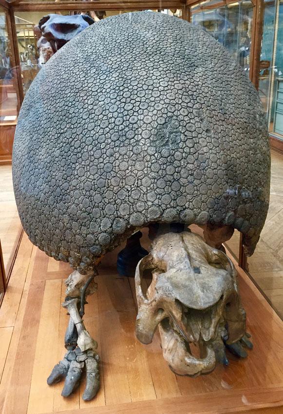 galerie de paléontologie 13 la-tete-en-lair.net.jpg