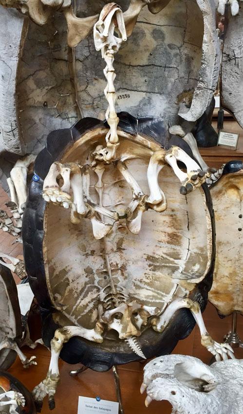 galerie de paléontologie 22 la-tete-en-lair.net.jpg