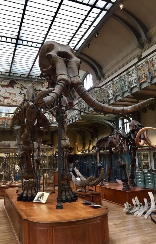 galerie de paléontologie 20 la-tete-en-lair.net.jpg