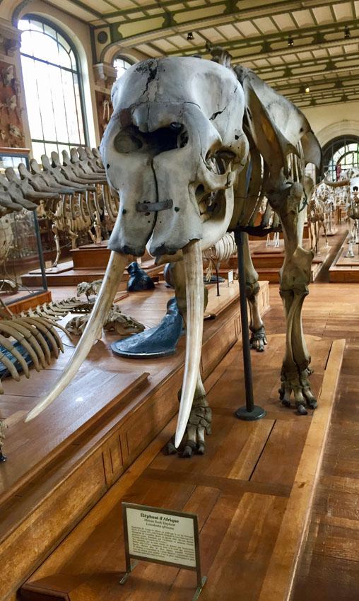 galerie de paléontologie 21 la-tete-en-lair.net.jpg