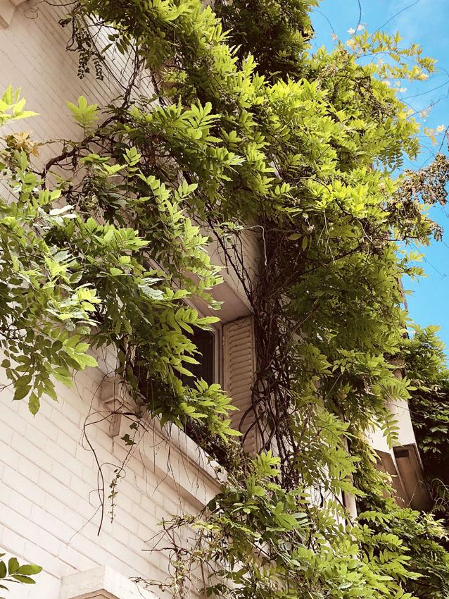cite florale 9.jpg