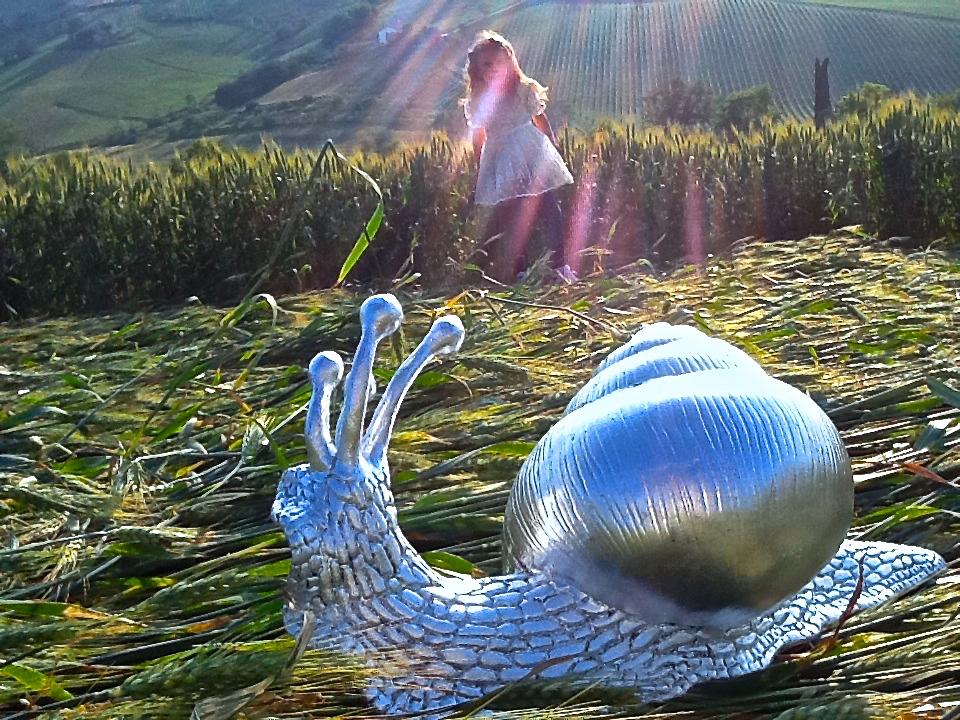 2015 08 24 crop circle snail celeste.jpg