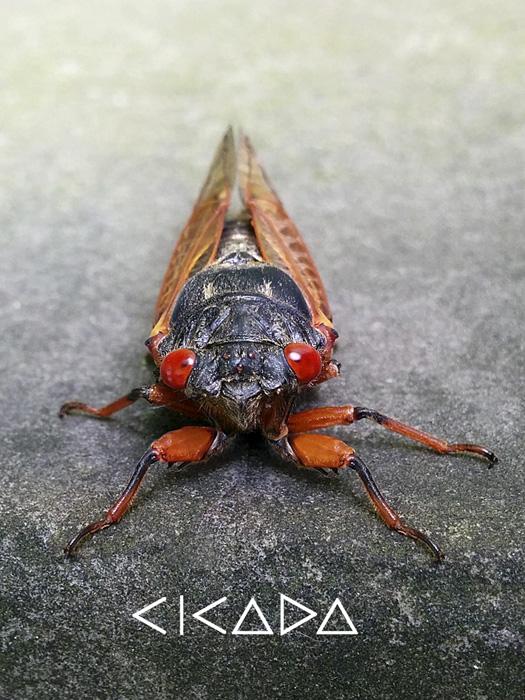 CicadaVerticalGeoFont700.jpg