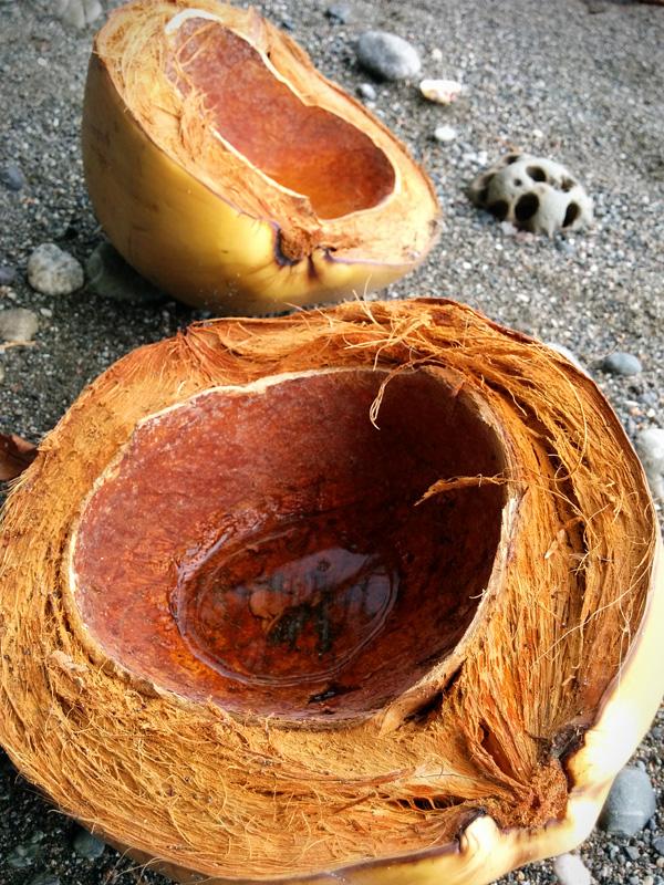 Coconut_115607.jpg