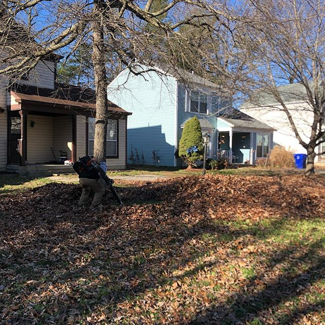 We also provide leaf removal service.