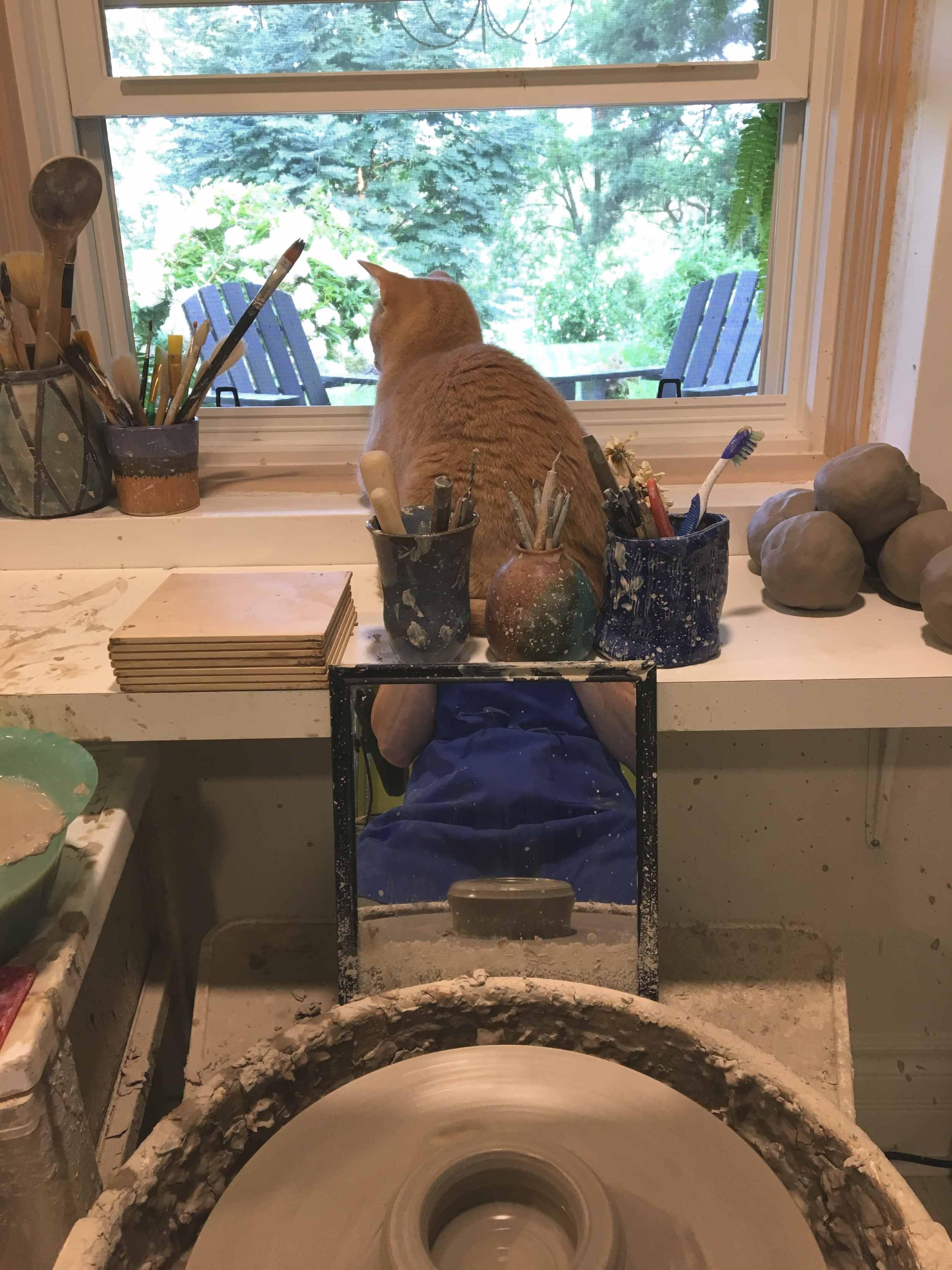 cat in studio web.jpg
