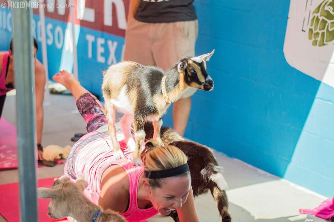 Goat Yoga for Charity Event