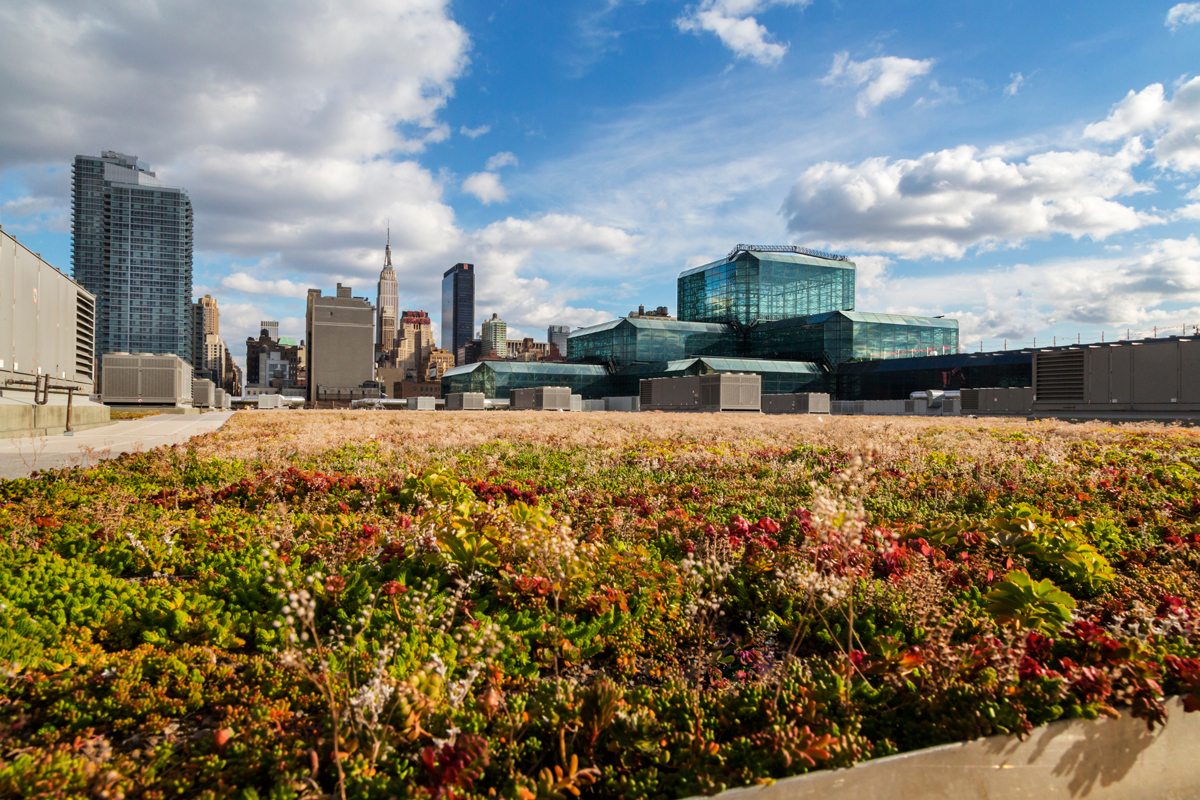 javits-center_green-roof_ds.jpg