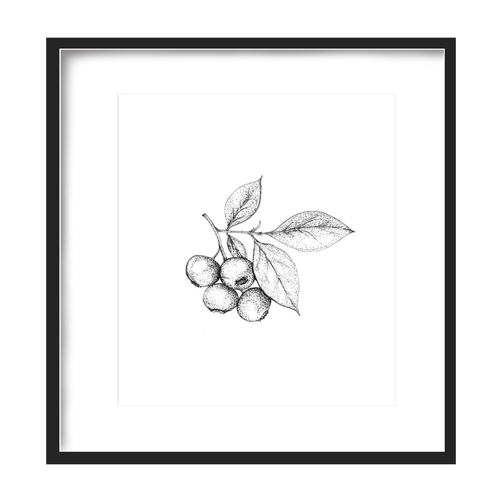 Blueberries Print 5x5 - $5 -