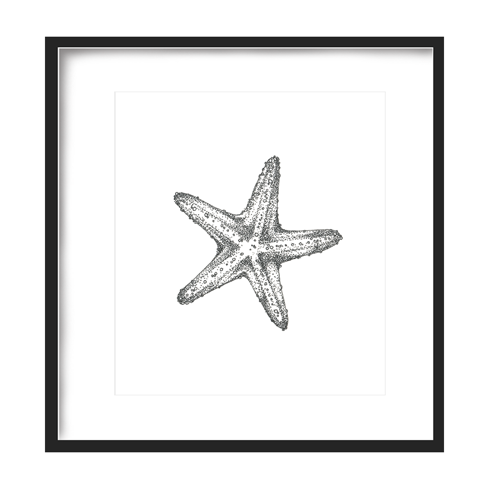 Starfish Print 5x5 - $5 -
