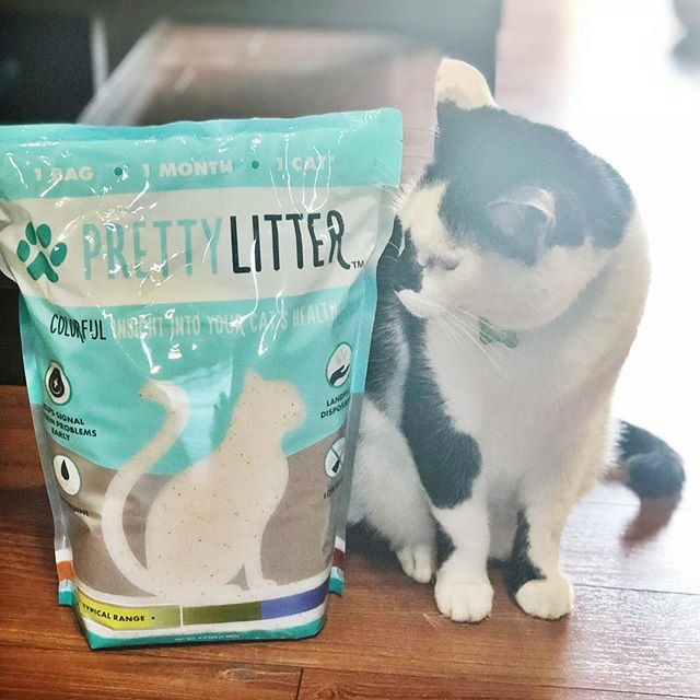 """Anyone who knows me, knows I love my kitty 🐾 I was so excited to find this #prettylitter not only for it's odor control, but it's built-in health monitoring! This litter actually turns colors based on your cats pH levels so you immediately know if your furbaby is sick! ➳ ➳ BONUS: You can actually sign up to receive a 1-month supply to your door, every month, with FREE shipping 🙀 ➳ ➳ Right now, @prettylittercats is letting my followers use the code """"Zander"""" for 20% OFF! ➳ ➳ #prettylittercats #prettylitterkitty #hbtsp #hbtprettylitter"""