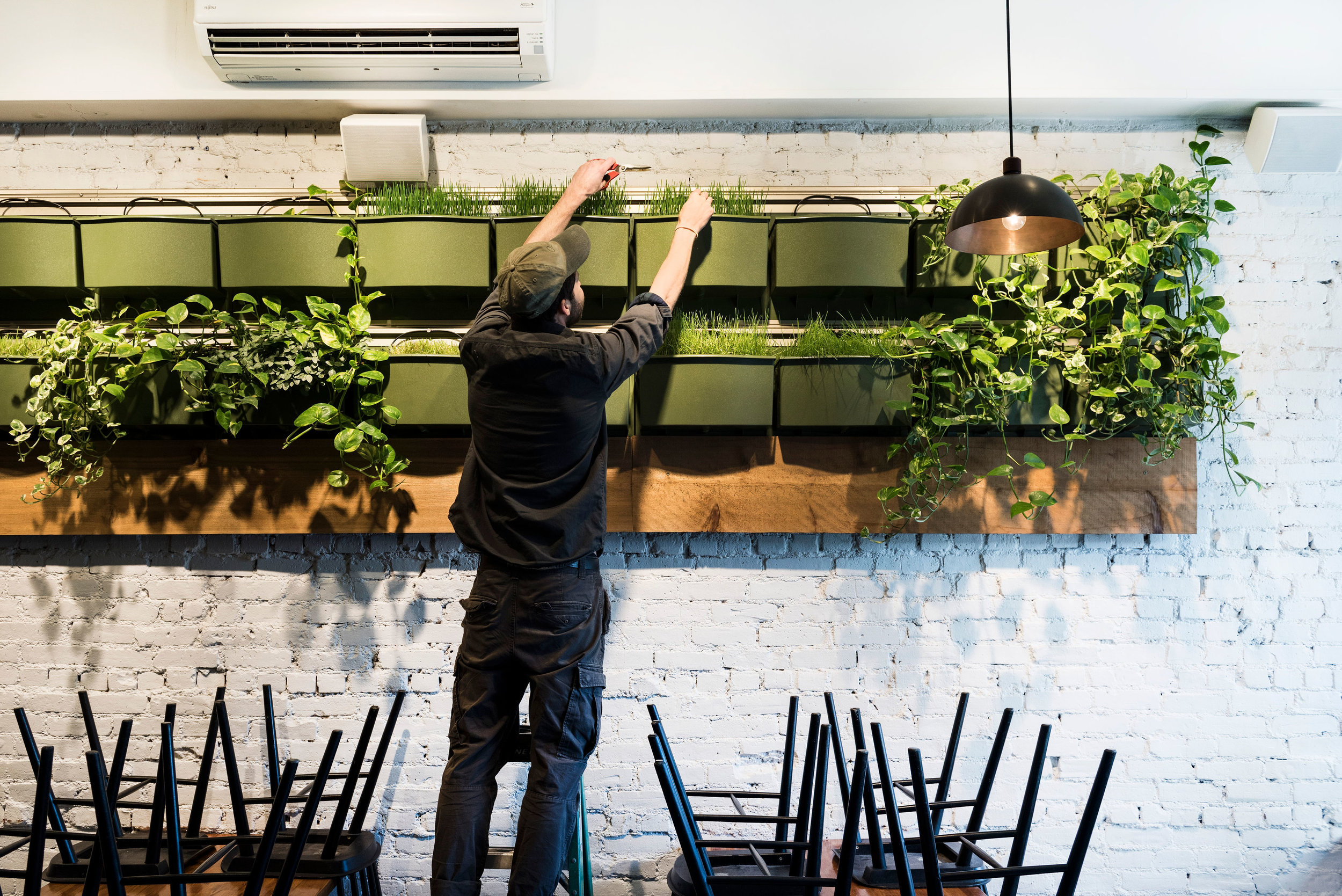 Olmsted's indoor hydroponic wall spans the length of the restaurant. Photo by  Liz Clayman .