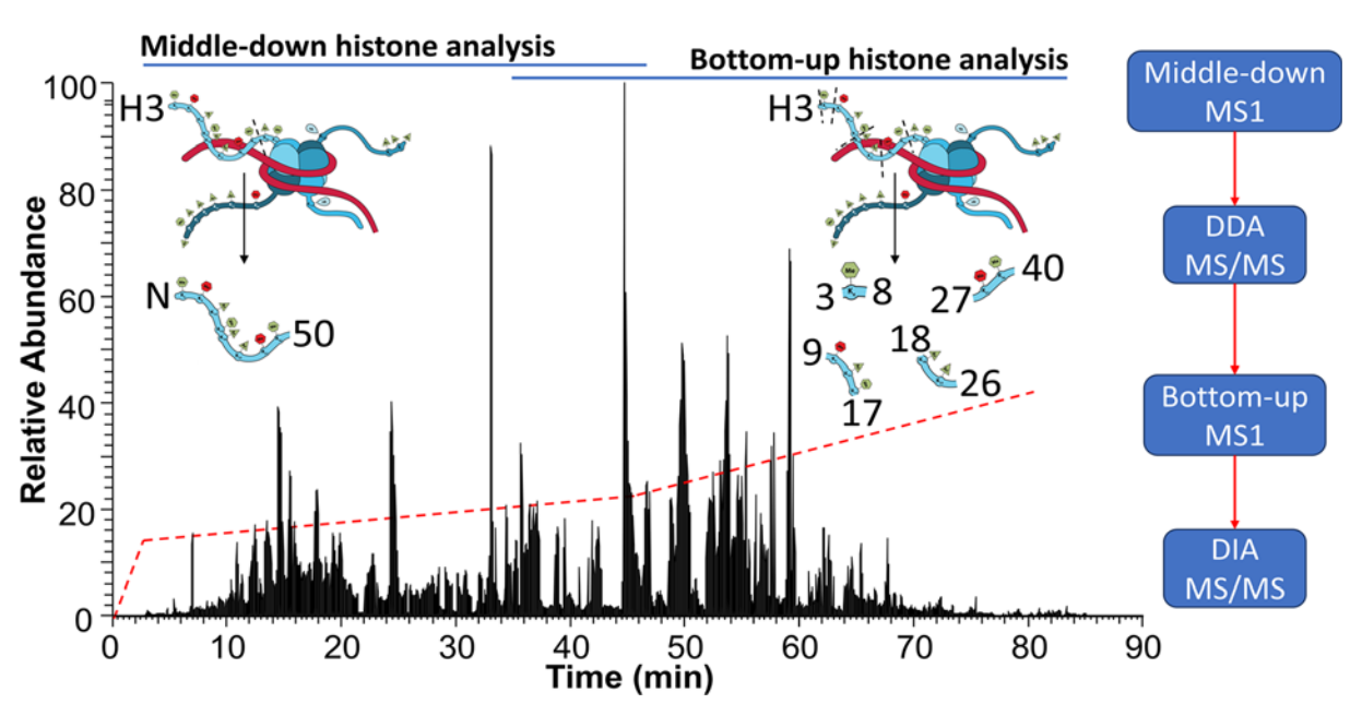 Quantitation of Single and Combinatorial Histone Modifications by Integrated Chromatography of Bottom-up Peptides and Middle-down Polypeptide Tails - Janssen KA, Coradin M, Lu C, Sidoli S and Garcia BA (Journal of the American Society of Mass Spectrometry, 2019)