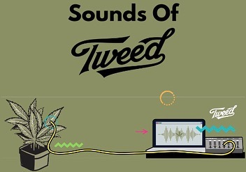 """Canadian Licensed Producer @tweed wants the public to know that it is possible to extract more than just THC and CBD from cannabis.  Tweed's team of """"dedicated plant musicologists"""" are able to record the changes of electrical currents flowing through a cannabis plant and then convert them into musical notes. 🎶 🎧  Swipe to watch the full video explaining the process and a few examples of the sounds Tweed's strains make.  Read the full story (link in bio) at adcann.ca/advertising/sounds-of-tweed"""