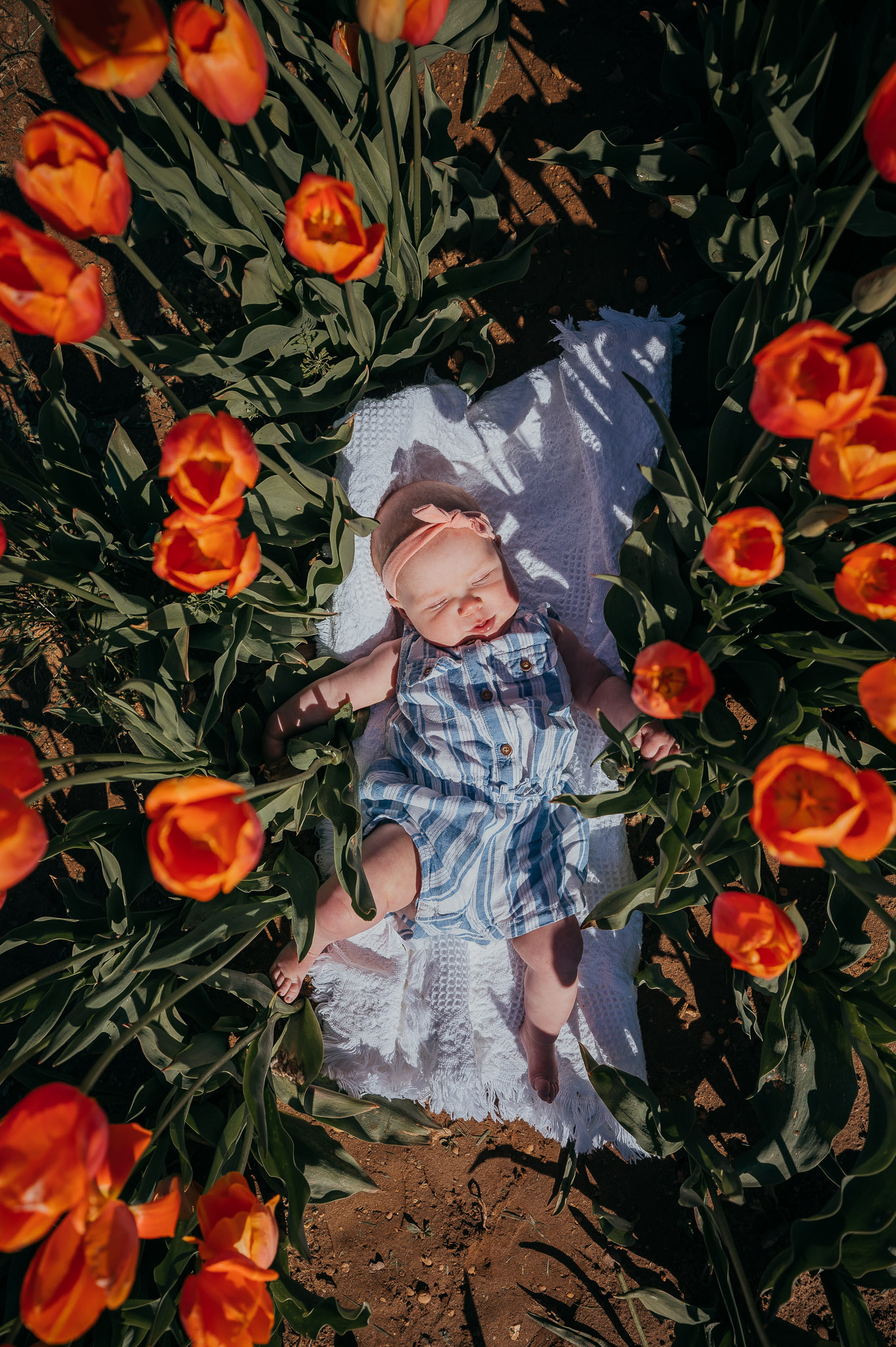 Tulips-4458.jpg