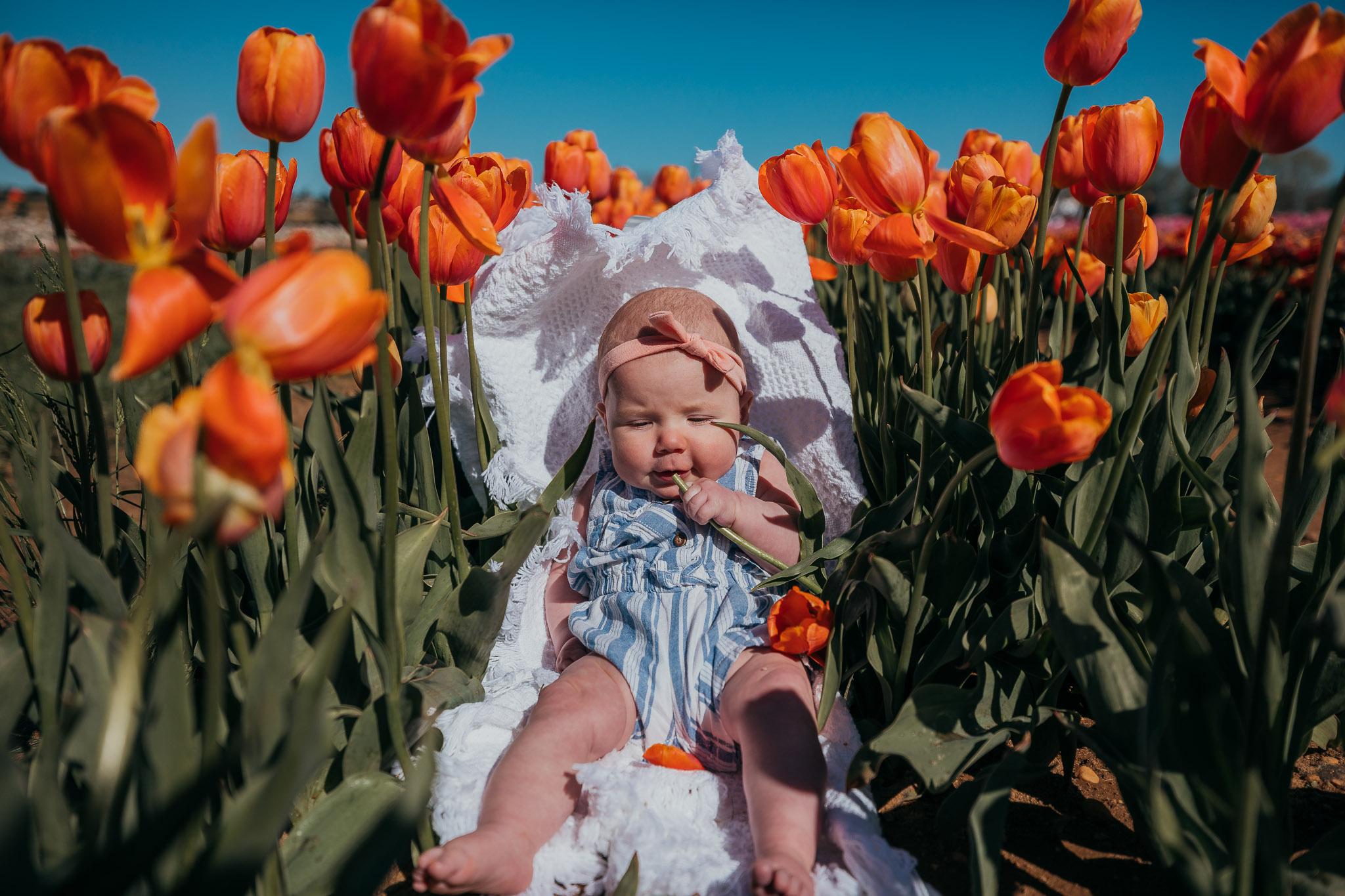 Tulips-4466.jpg