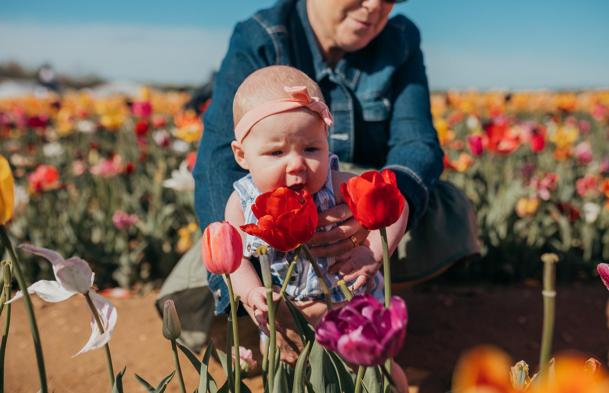 Tulips-4420.jpg