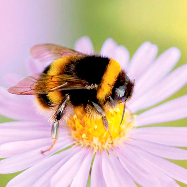 Honeybee detail.jpg