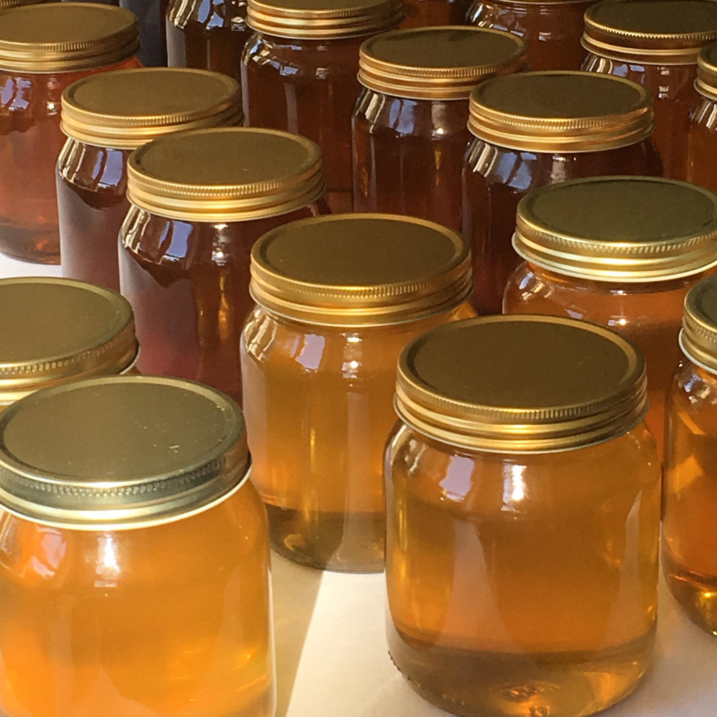 NLB honey show 18 square.jpg