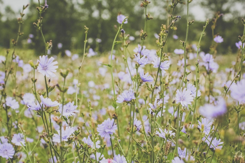 summer-wild-flowers.jpg