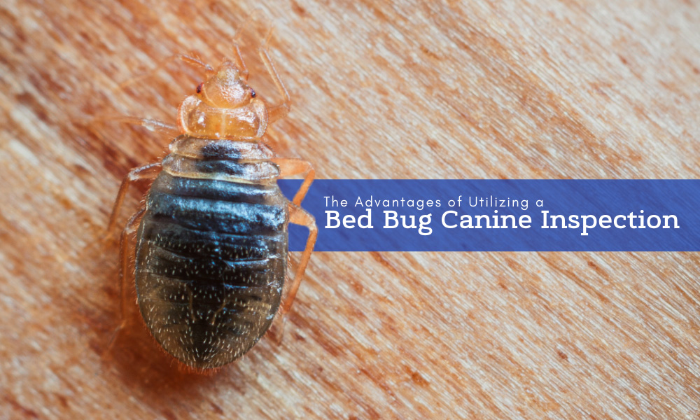 The Advantages of Utilizing a Bed Bug Canine Inspection.jpg