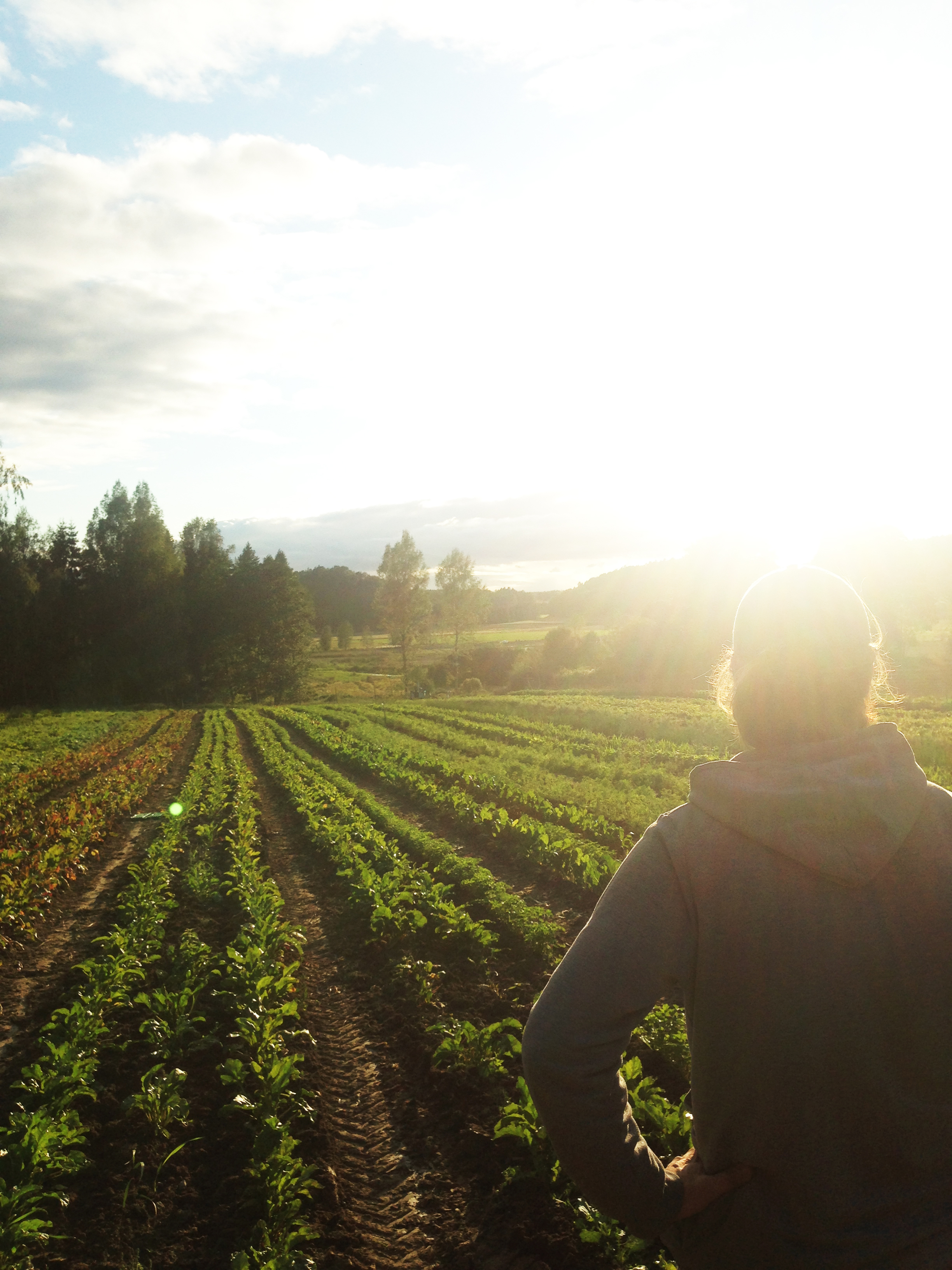 Mauritz, head chef and farmer, in one of the four vegetable fields
