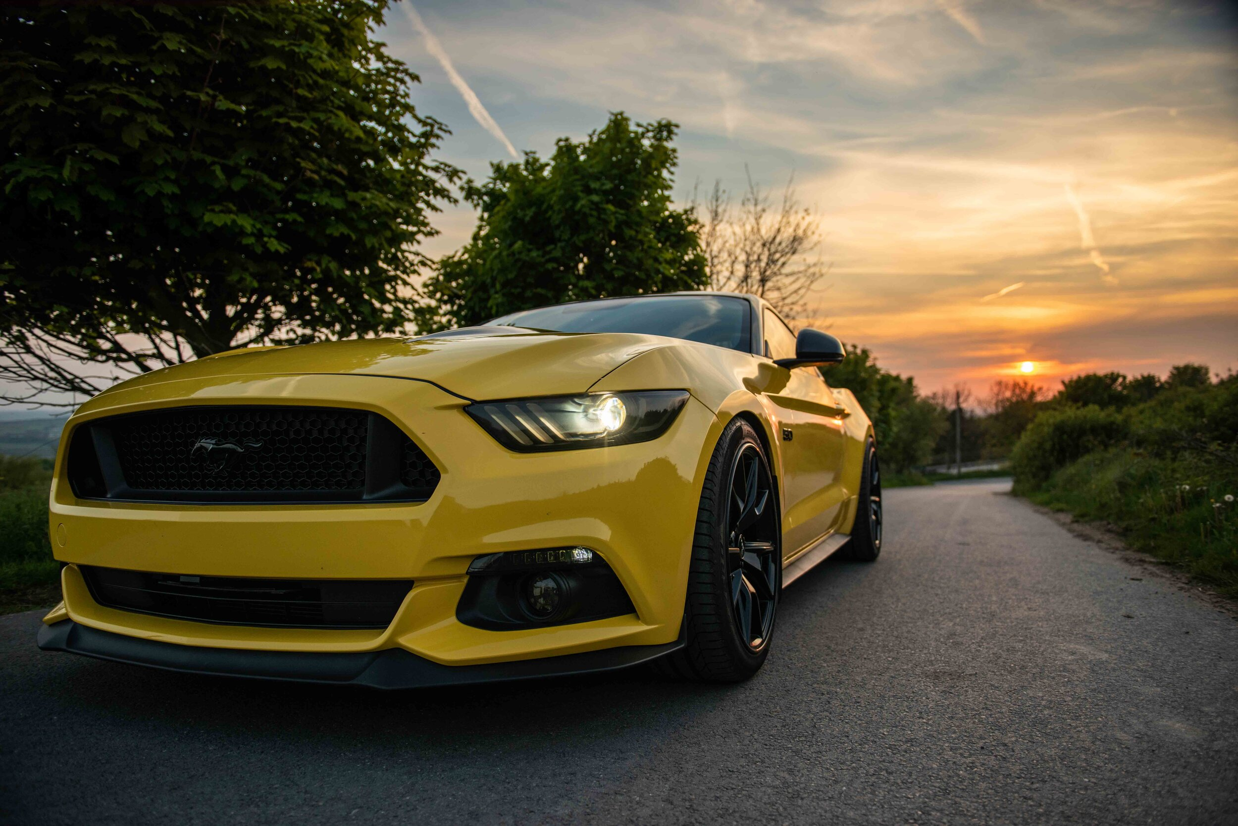 Mustang-24.jpg
