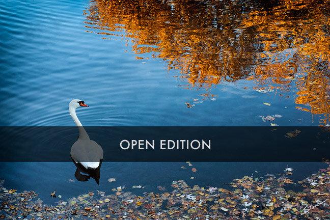 openedition_.jpg