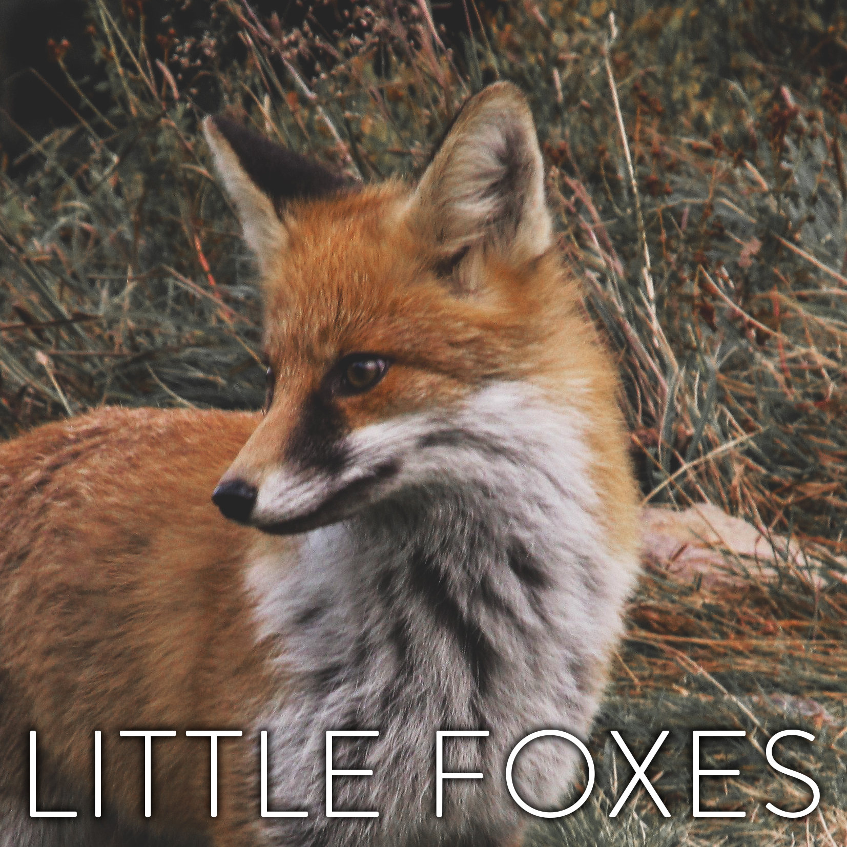 little_foxes_podcast.png