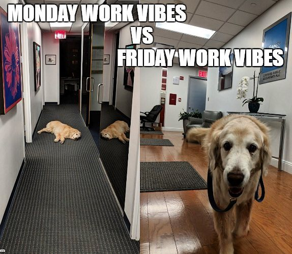 #taxseason #complaintsdept #dogsofinstagram  #officedogs #dogsoftheday #dogsofnyc #uws #uwsdog #dogs #buzzfeeddogs #dogstagram #accounting #cpa #nycofficedogs #nyc #marketingdog #dogoftheuws #centralparkpaws #dogsofig #dogsofinsta #dogloversfeed #doglovers #doglove #upperwestside  #barks #dog