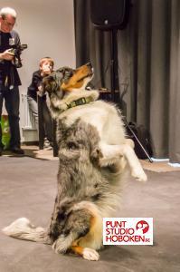 2016_01_09_doggy_show_groenzuid-8.jpg