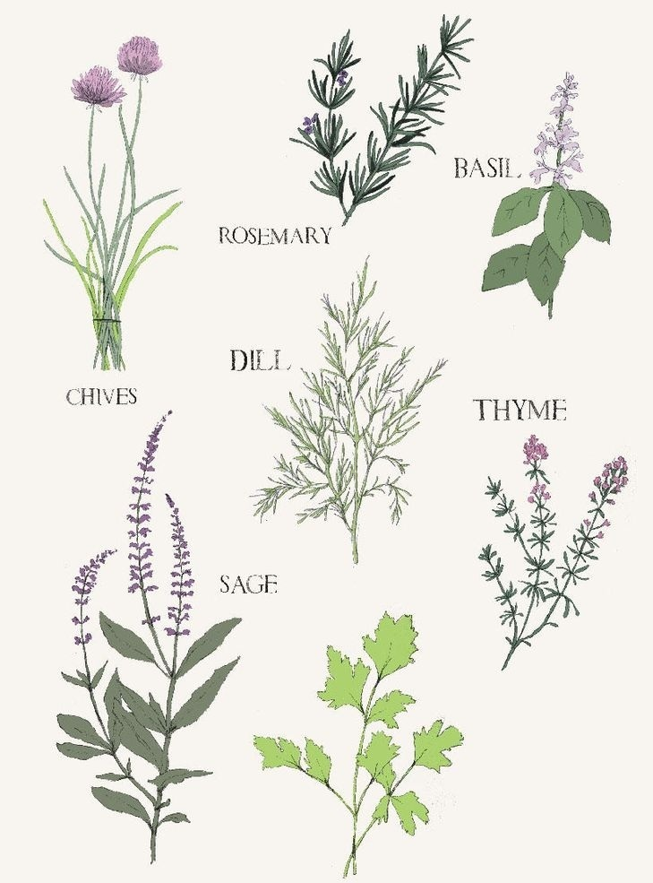 Herbs that healthy for you