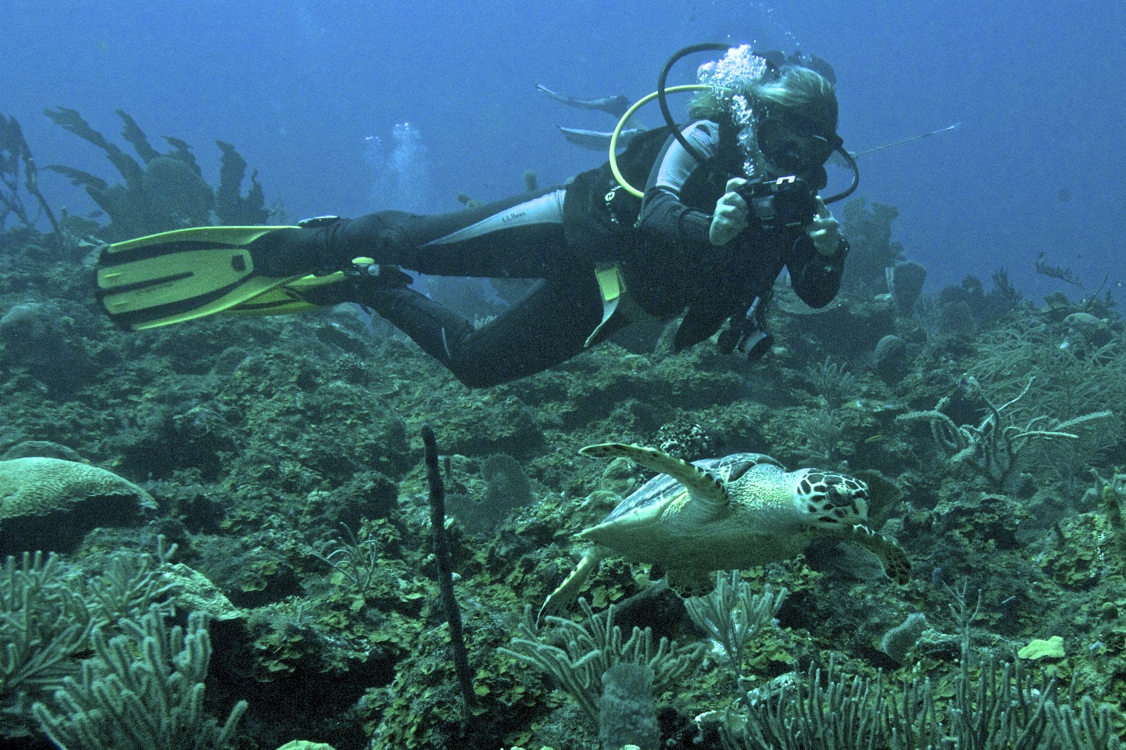 above picture: UW Photography dive at Cayos Cochinos Sea Mounts