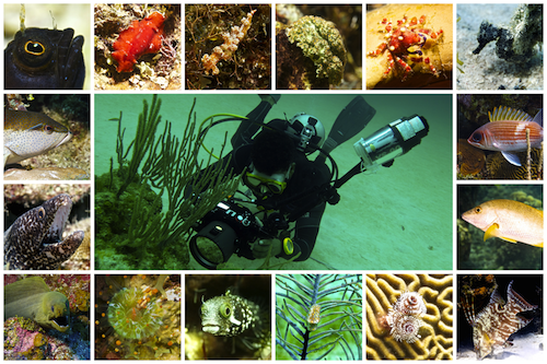 COMING SOON - + Special Dives. Visit us later. Thank you!