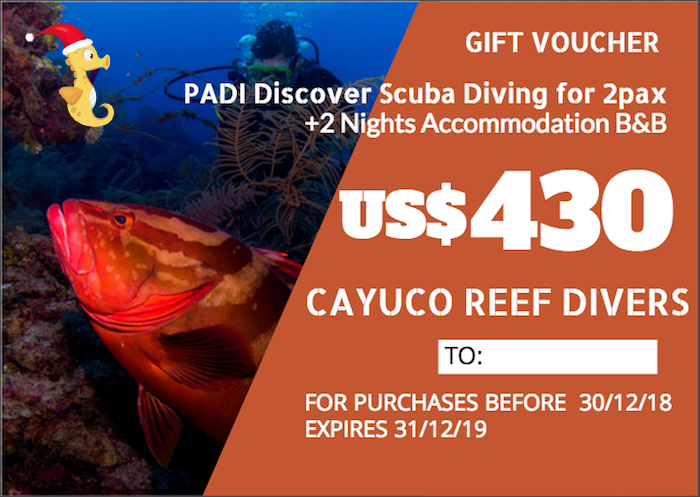 Discover Scuba Diving + 2 Nights B&B    For 2 persons. Taxes included.    Para 2 personas. Impuestos incluídos.