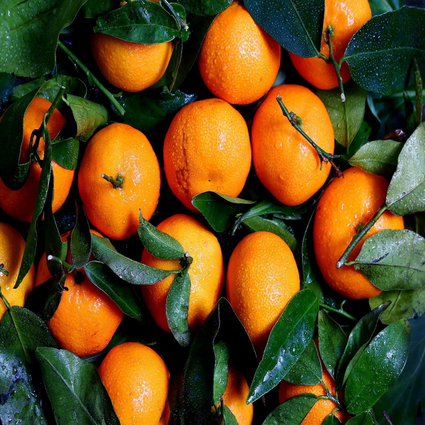 Orange Essential Oil & Hydrosol