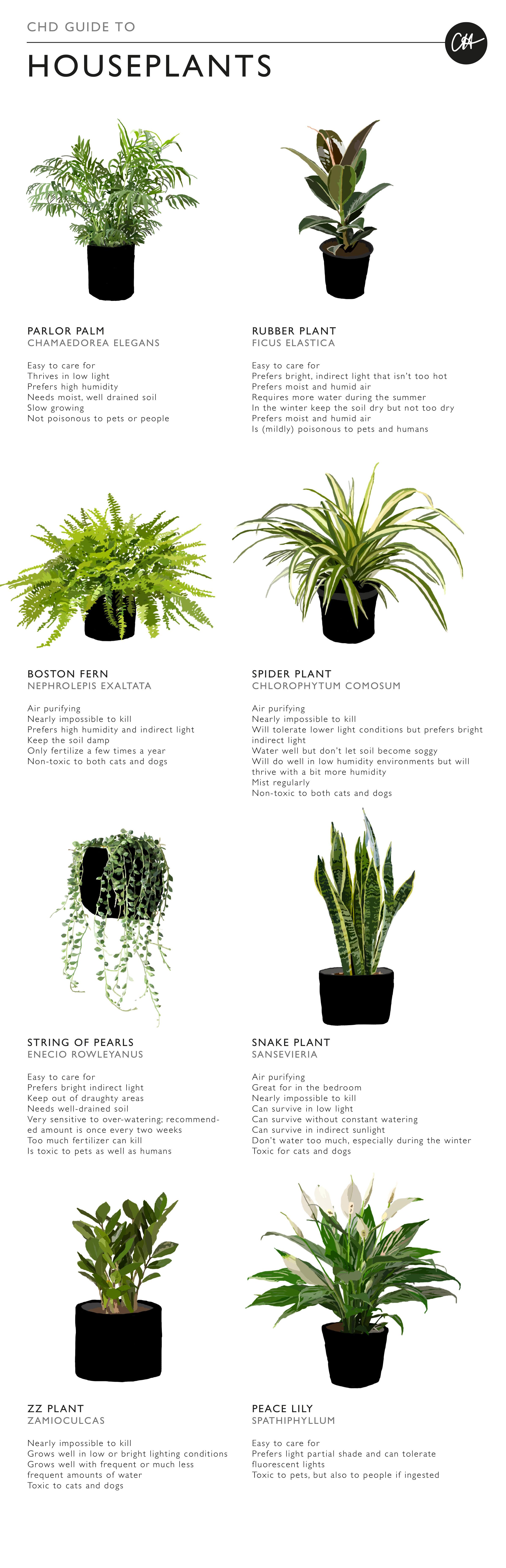 Focus On House Plants Claire Heffer Design