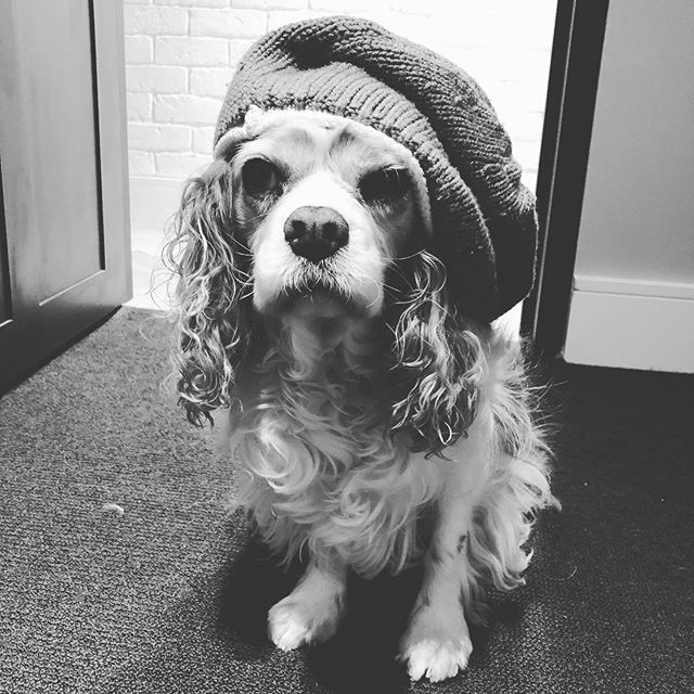 + THINK // my office manager is trying to tell me something? . . . . #dogsofinstagram #honeyitscoldoutside #beanie #walk #beammeupscotty #englishcavalier #cavalierkingcharlesspaniel #lovethisguy #bestdogever #digitalstrategist #digitalmarketing #winter