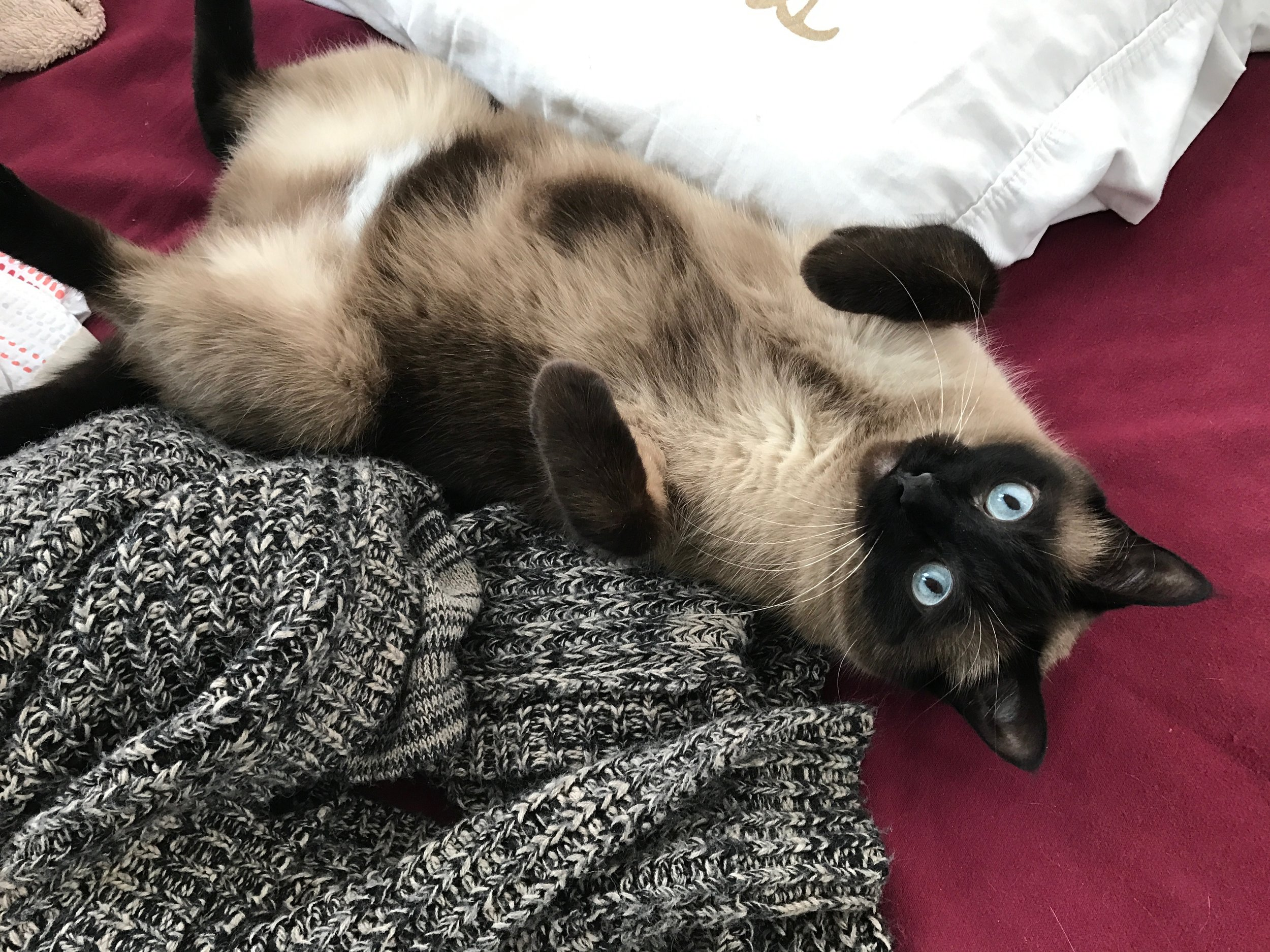 Hey Kitty Mom - You're obsessed with your cat.So am I. Let's talk about it!