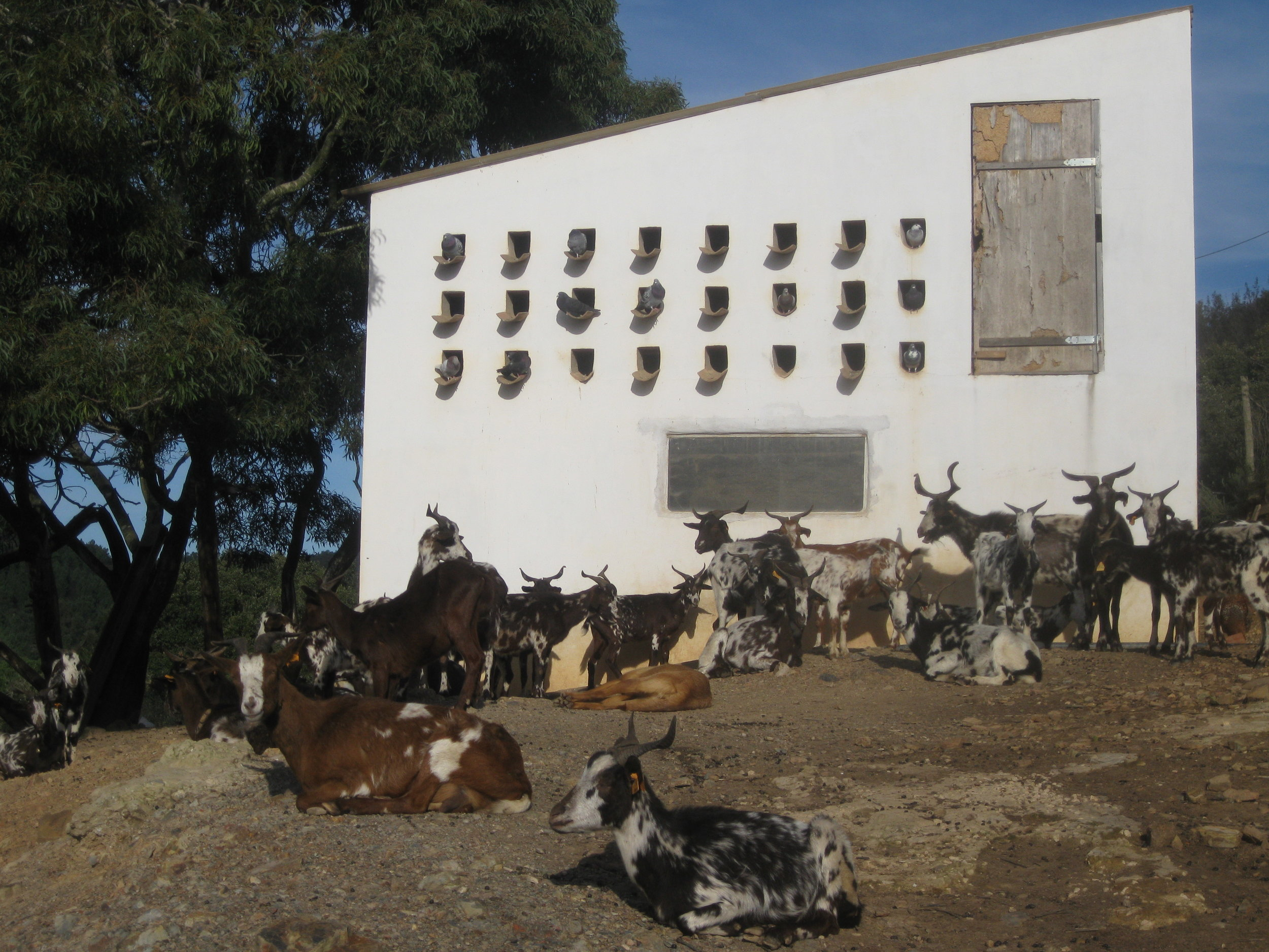 Traditional goat barn in the south of Portugal, 2010.